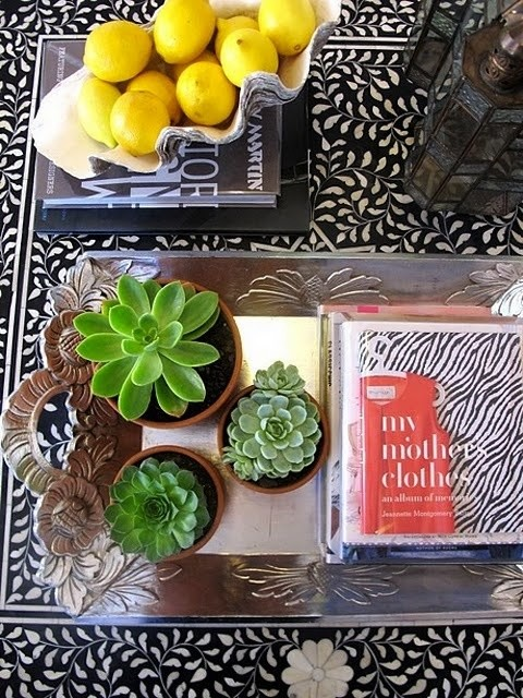 succulents on coffee table by The Decorista